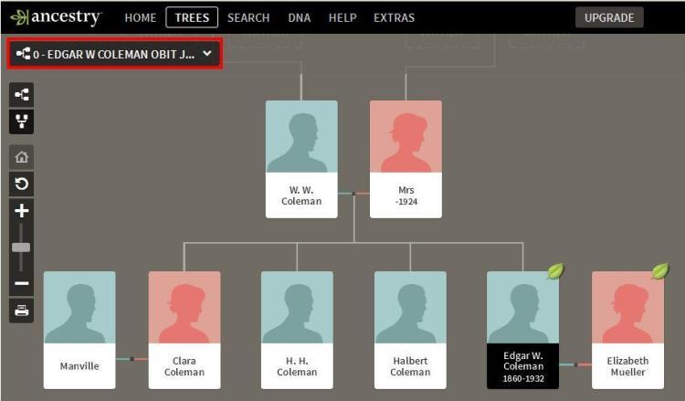 Slide 8 - Edgar W Coleman Tree