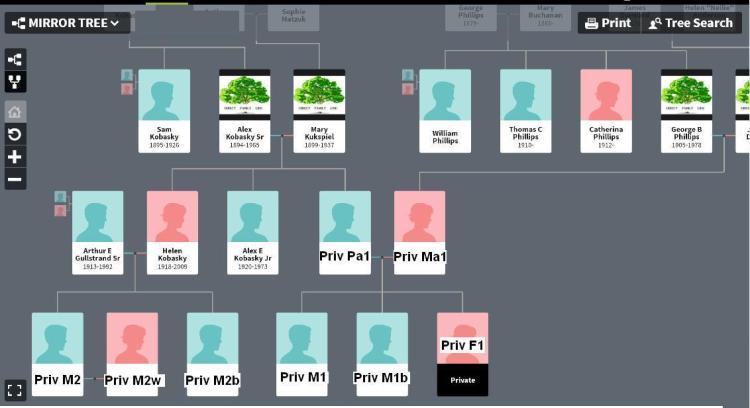 FB - 2nd cousins - test tree